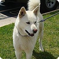 Adopt A Pet :: Skyrocket - West New York, NJ