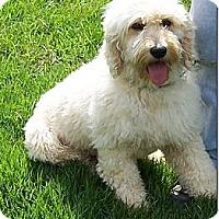 Adopt A Pet :: BRANDY - W. Warwick, RI