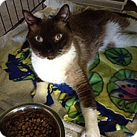 Adopt A Pet :: Kane - Byron Center, MI