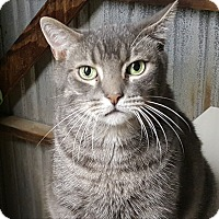 Adopt A Pet :: JJ - Pasadena, CA