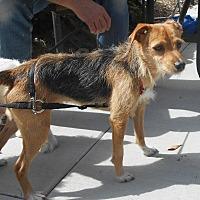 Adopt A Pet :: Lenny - Palmyra, NE