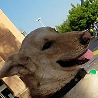 Adopt A Pet :: Monty - Porter Ranch, CA