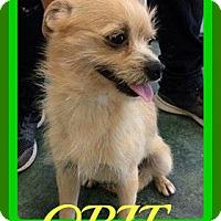 Adopt A Pet :: OBIE - Jersey City, NJ