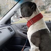 Adopt A Pet :: Bruno - Carlisle, PA