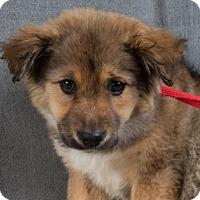 Adopt A Pet :: Robin - Colorado Springs, CO