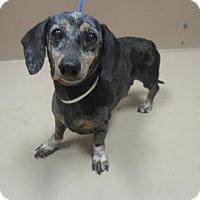 Adopt A Pet :: DARREL - Reno, NV