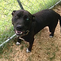 Adopt A Pet :: Katie - Cookeville, TN