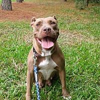 Adopt A Pet :: Sunshine - Orlando, FL