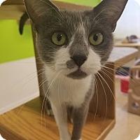 Adopt A Pet :: Sappho - Chicago, IL