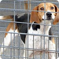 Adopt A Pet :: Rosie--RESCUED! - Marlinton, WV
