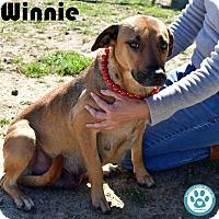 Adopt A Pet :: Winnie - Kimberton, PA