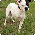 Adopt A Pet :: Meredythe Grey