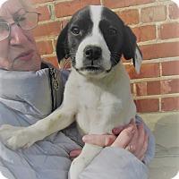 Adopt A Pet :: Lorelei - Germantown, MD