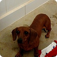Adopt A Pet :: HOPE - WOODSFIELD, OH