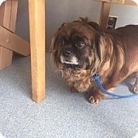 Adopt A Pet :: MingMing - N. Babylon, NY