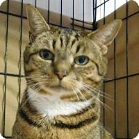 Adopt A Pet :: Cookie - Winston-Salem, NC