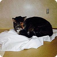 Adopt A Pet :: Zephir - Pittstown, NJ