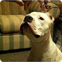Adopt A Pet :: Link - Sierra Vista, AZ