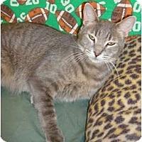 Adopt A Pet :: Silver - Lake Charles, LA
