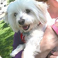 Adopt A Pet :: Max - Sherman Oaks, CA