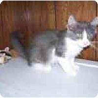Adopt A Pet :: Austin - Grand Rapids, MI