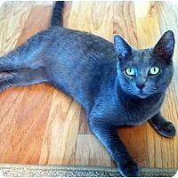 Adopt A Pet :: Misty - Alexandria, VA