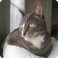 Adopt A Pet :: Asher - Bedford, MA