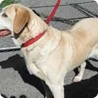 Adopt A Pet :: Hallie - Columbus, IN
