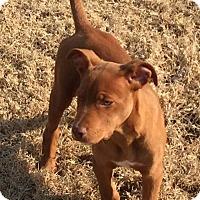 Adopt A Pet :: Copper - Broken Arrow, OK