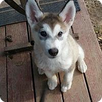 Adopt A Pet :: Ecco - Sacramento, CA