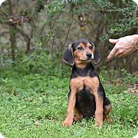 Adopt A Pet :: Pamona - Groton, MA