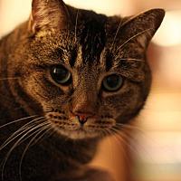 Adopt A Pet :: Matilda - Kingston, WA