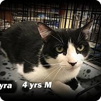 Adopt A Pet :: Tyra - Brandon, FL