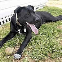 Adopt A Pet :: BeeBee - Durham, NC