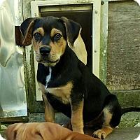 Adopt A Pet :: Kyle - Groton, MA