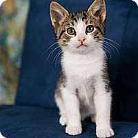 Adopt A Pet :: Nemo - Eagan, MN