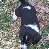 Adopt A Pet :: Mr. T - cedar grove, IN