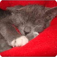Adopt A Pet :: Comet - Greenville, SC