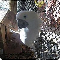 Adopt A Pet :: Sassy - Melbourne Beach, FL