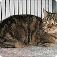 Adopt A Pet :: Honey - Shelton, WA