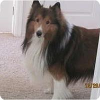 Adopt A Pet :: Sebastian - apache junction, AZ