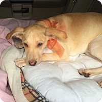 Adopt A Pet :: Gisella - Holmes Beach, FL