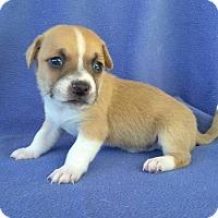 Adopt A Pet :: Wally - Lawrenceville, GA