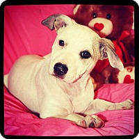 American Bulldog Mix Puppy for adoption in Grand Bay, Alabama - Sierra