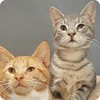 Adopt A Pet :: Fizz & Mojito - Walworth, NY