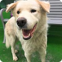 Adopt A Pet :: JUDE - Minnesota, MN