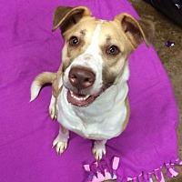 Adopt A Pet :: Myrtle - Acworth, GA