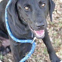 Adopt A Pet :: Zak - Coldwater, MI