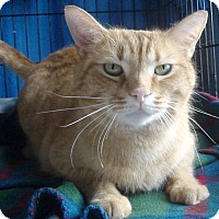 Adopt A Pet :: Jenner - Germansville, PA