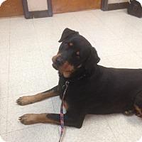 Rottweiler Dog for adoption in Baton Rouge, Louisiana - Joy